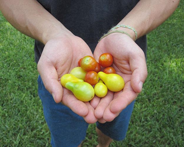 welcometomatoes