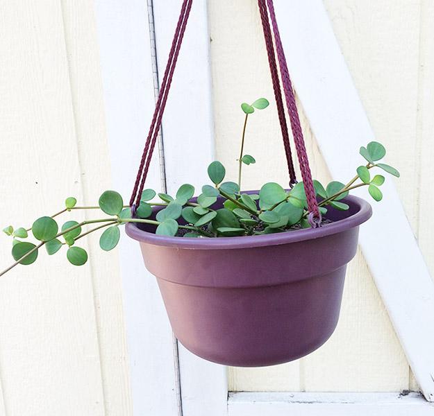 hangingplantpot