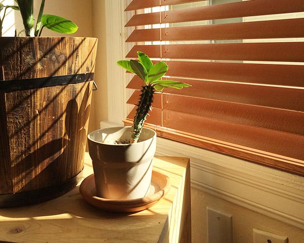 houseplantcactus1