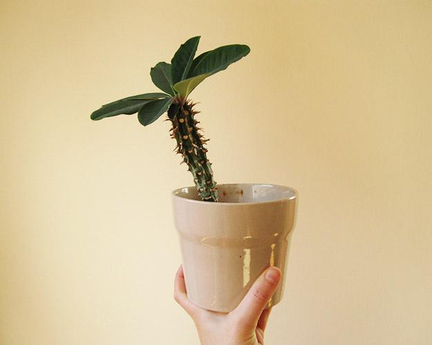 houseplantcactus2
