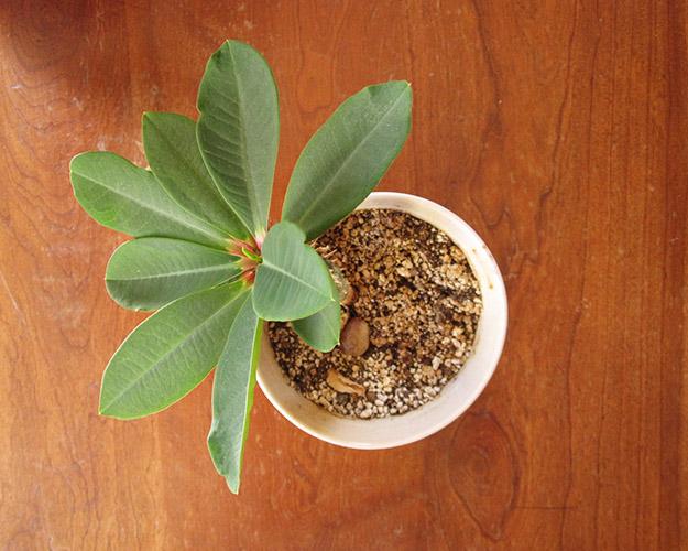 houseplantcactus3