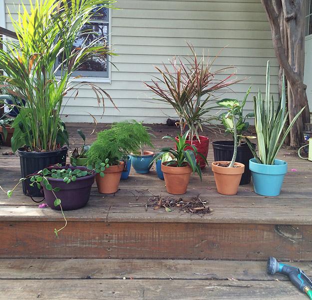 plantbath
