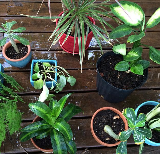 plantbath2