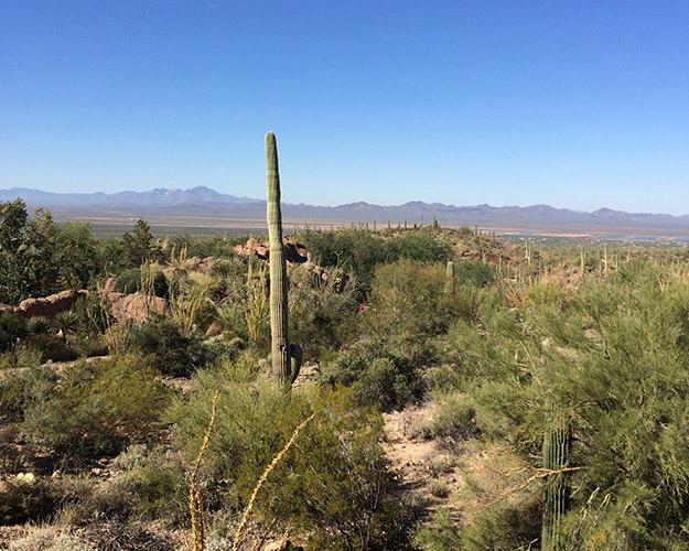 desert museum3