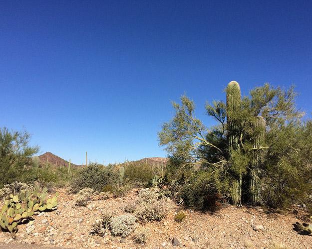 desert museum4