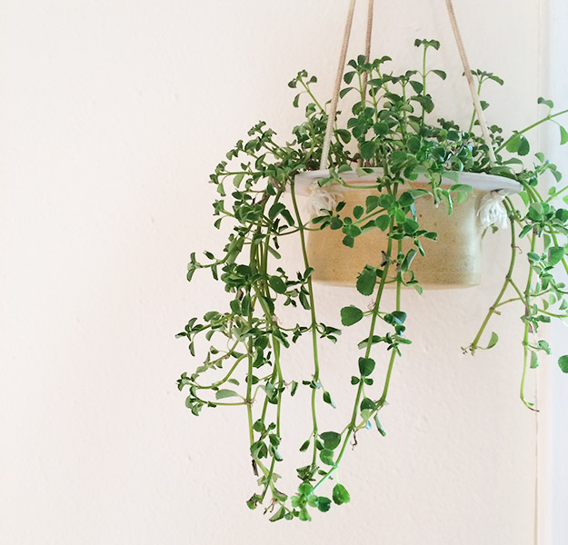 houseplanthanginglivingroom