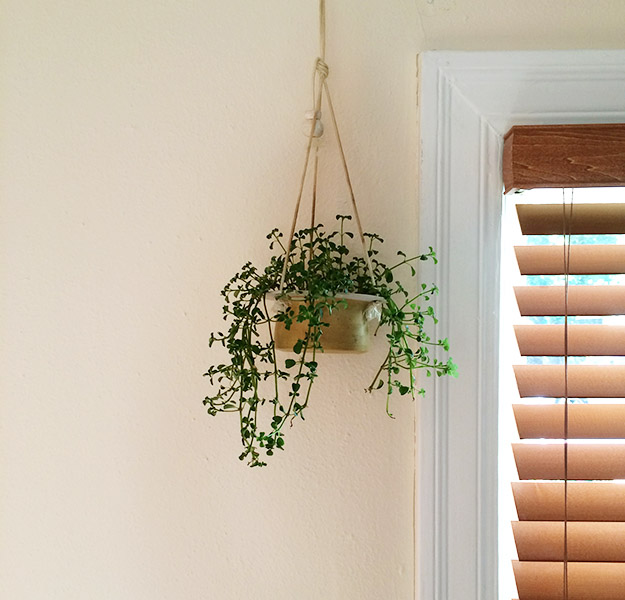houseplanthanginglivingroom2