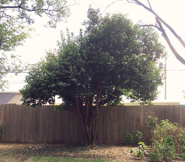 trimtree1